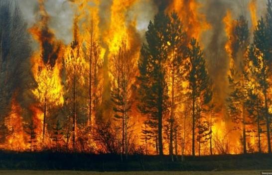 Zjarret në pyje shkaktohen nga dora e njeriut