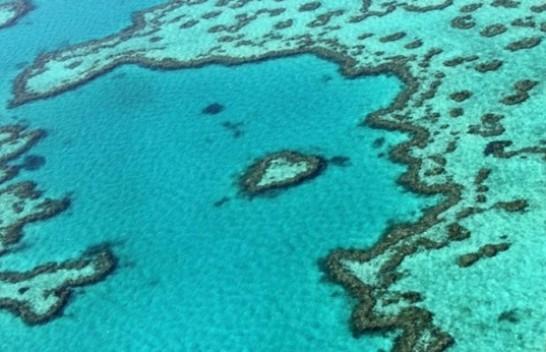 Studim: Valët e të nxehtit po dëmtojnë koralet