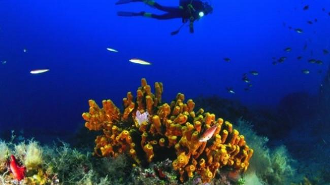 Ndryshimet klimatike dëmtojnë jetën detare