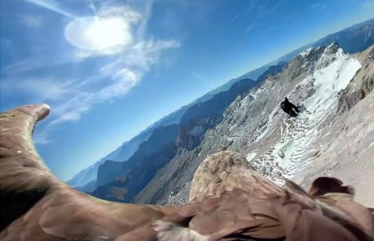 Pamje të filmuara nga shqiponja tregon për reduktimin e akullnajave në Evropë
