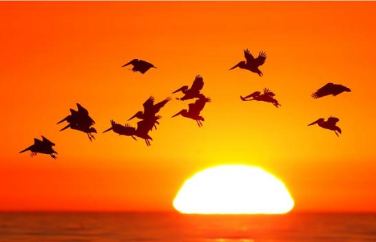 Dy të tretat e zogjve në SHBA po zhduken për shkak të ndryshimeve klimatike