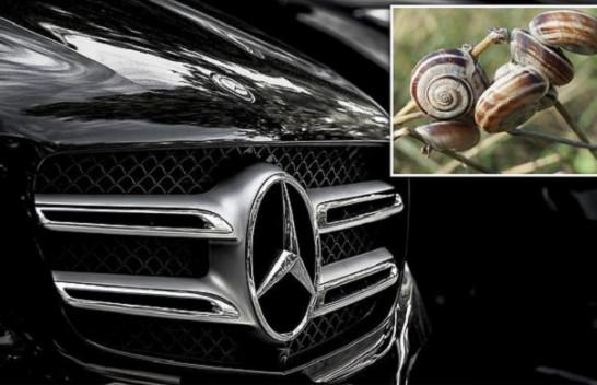 E çuditshme por e vërtetë, kërmilli bllokon 900 Mercedes
