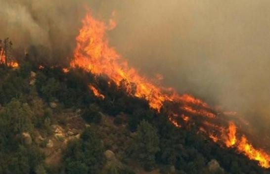 Agjencia për Mbrojtjen e Mjedisit bën thirrje për mbrojtjen e pyjeve dhe Parqeve Kombëtare nga zjarret