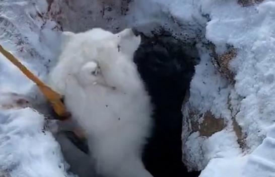 Pronari rrezikon jetën për të shpëtuar qenin e ngelur në gropën e ngrirë