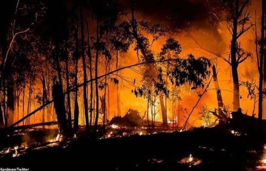 Australia në alarm, 30 mijë turistë të bllokuar nga zjarret [Foto]