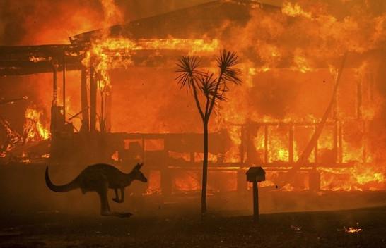 Zjarret në Australi kanë djegur të gjallë 500 milionë kafshë (Foto)