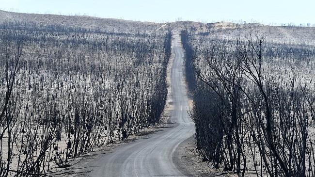 Në foto: Toka e djegur nga zjarret në ishullin Kangaroo