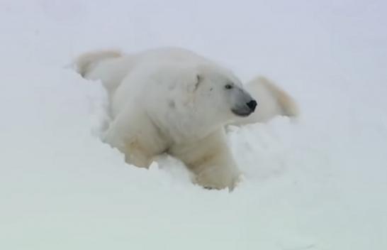Pesë momente fantastike nga bota të kafshëve [Video]