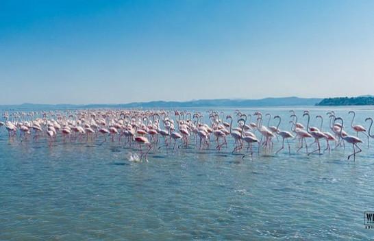 Përfundon censusi i shpendëve ujorë në Shqipëri