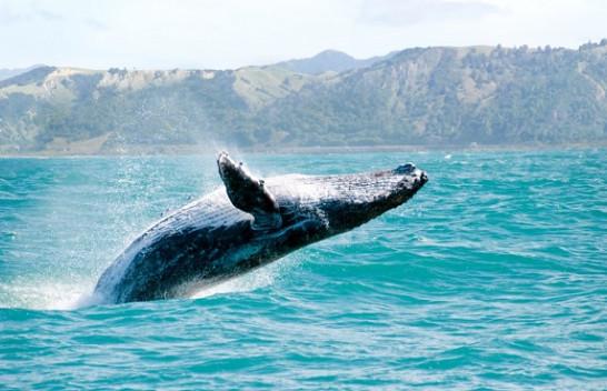 Këto gjallesa rrezikojnë të zhduken për shkak të ndryshimeve klimatike
