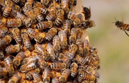 Komisioni Evropian ndalon pesticidet Bayer të dëmshme për bletët dhe njerëzit