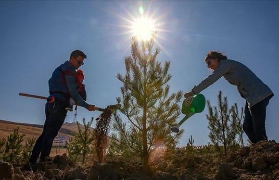 Turqia e gjelbër/ Synohet mbjellja e 82 milionë fidanëve deri në nëntor
