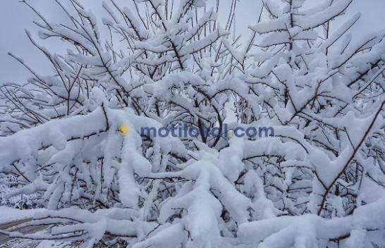 Shi dhe borë – mësoni më shumë si do të jetë moti këtë fundjavë në Kosovë
