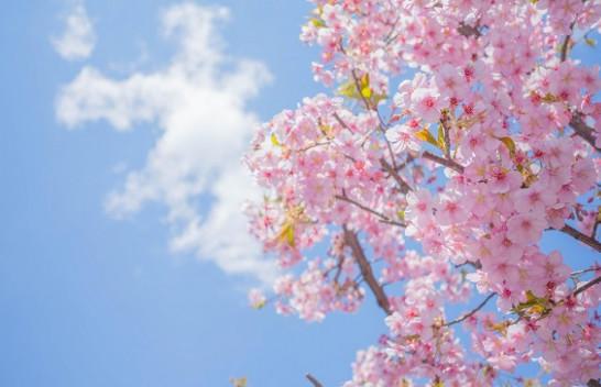 Sot dita e pranverës sipas kalendarit meteorologjik