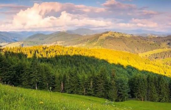 Agjencia e Pyjeve të Kosovës bën thirrje për mbrojtjen e pyjeve nga zjarret