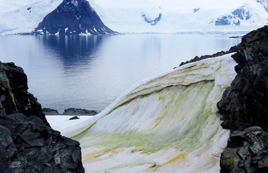 Ndryshimet klimatike po e bëjnë të gjelbër Antarktidën