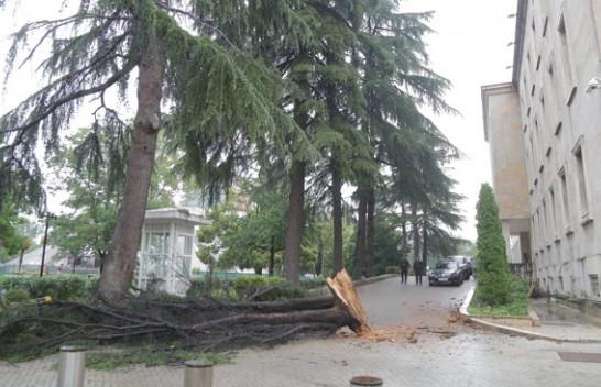 Nga era e fortë rrëzohet pema në Tiranë