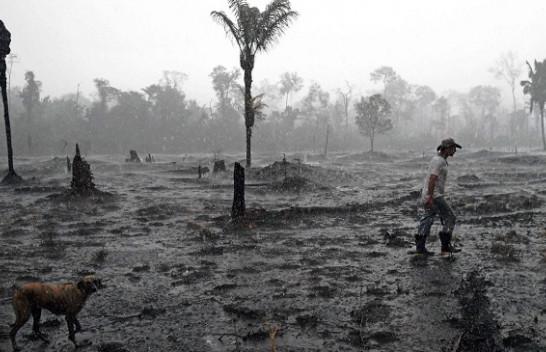 Studim: Rreth 12 milionë hektarë pyje janë shkatërruar në vitin 2019