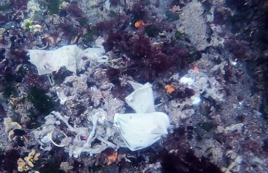 Ndotja që vjen nga COVID-19/ Maska, dorëza në ujërat e Bosforit