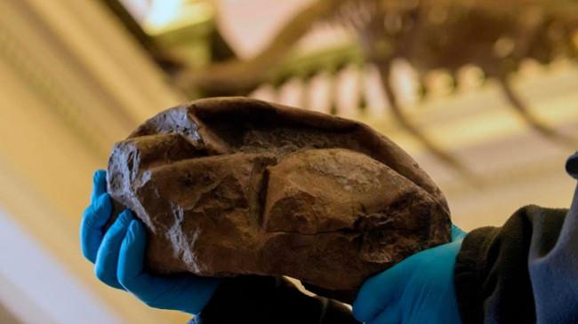 Në Antarktidë zbulohet për herë të parë një vezë gjigante, e vjetër 68 milionë vite