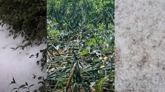 'Çmendet' moti në Maliq, breshëri dëmton rëndë kulturat bujqësore [Foto]