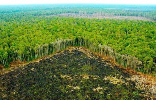 Pyllëzimi, më tepër dëme se të mira për ambientin!