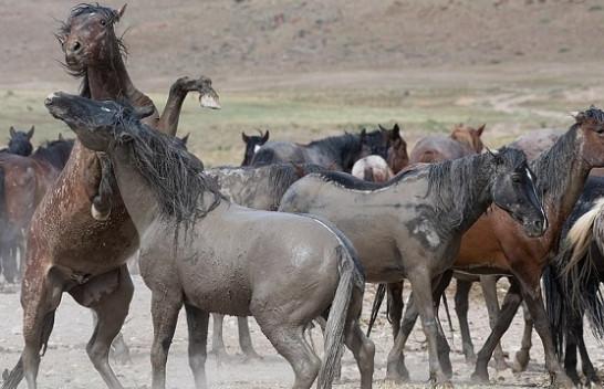 Dyluftim mes kuajve! Fotografi sjell imazhe të veçanta të tyre [Foto]