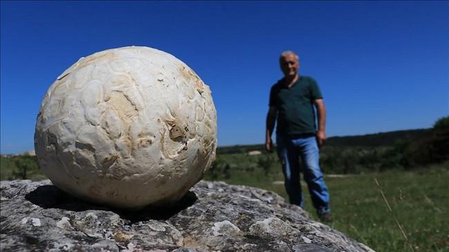 Ngjarje e pazakontë në Turqi: Gjendet kërpudha gjigante 5 kilogramësh