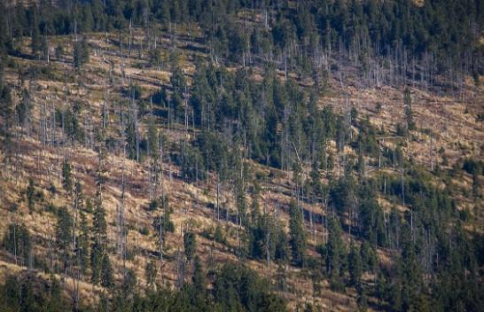 Shpyllëzimi në Evropë rritet për 50 për qind