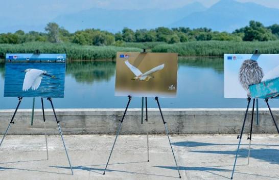 Liqeni i Shkodrës në fokusin e fotografëve të jetës së egër [Foto]