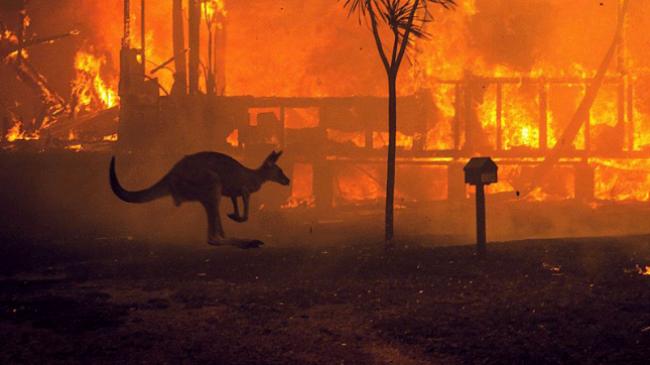Tre miliardë kafshë të vrara apo të zhvendosura nga zjarret në Australi