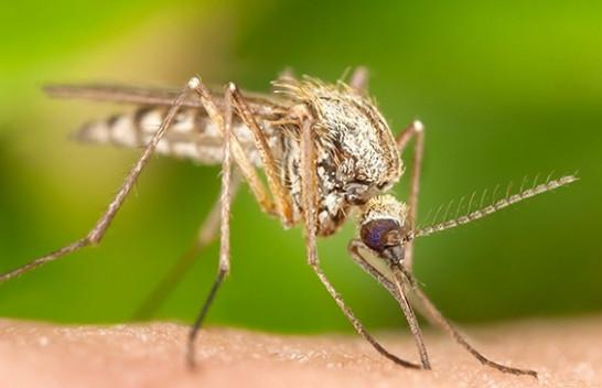 IKSHPK alarmon për mundësinë e shfaqjes të një virusi tjetër: Apelon te qytetarët për kujdes nga pickimi i mushkonjave
