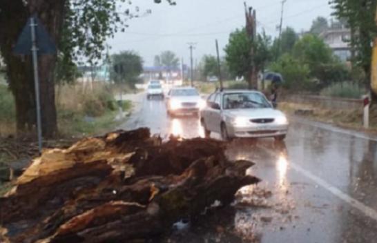 Erërat e forta rrëzojnë pemën, bllokohet rruga Gjirokastër-Kakavijë