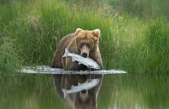 Fotografët shkrepin momentet më të bukura/ Publikohen imazhet më mahnitëse të botës së egër [Foto]