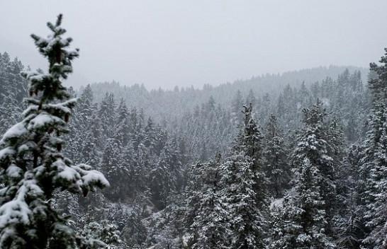 Nga reshjet e papritura të borës tek qiejt portokalli: Disa nga ngjarjet me rëndësi të javës përmes fotove