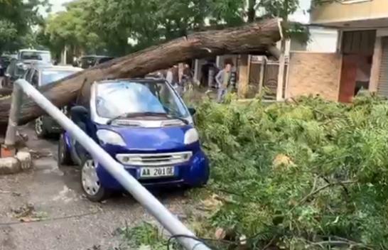 Stuhia godet Shqipërinë/ Era e fortë shkul pemët dhe dëmtohen disa makina në Shkodër
