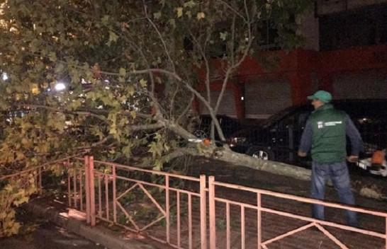 Stuhi shiu me era të forta, rrëzojnë pemët në Tiranë [Foto]