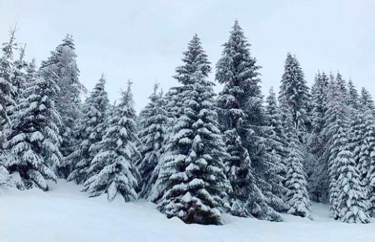 'Brrrrrrrr!': Vishuni trashë, acari siberik përfshin Kosovën