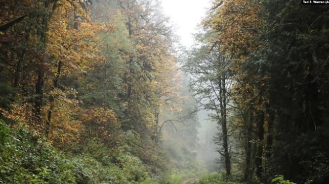 Banka Biologjike e Britanisë premton të mbrojë biodiversitetin e planetit